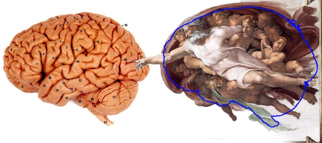 Cerebro creación miguel ángel